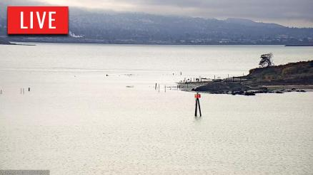 Golden Gate Osprey 1