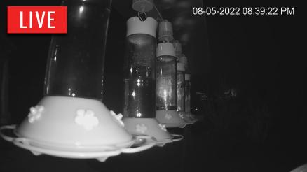 Live Hummingbird Feeders