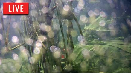Japanese Koi Pond