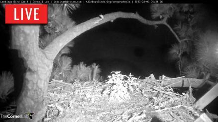 Skidaway Osprey Nest