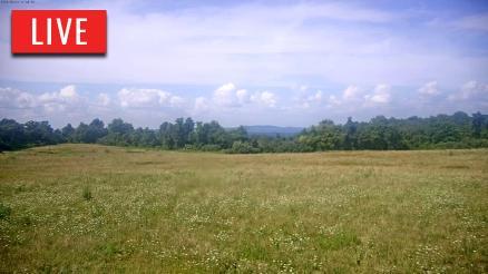 Tennessee Elk Cam